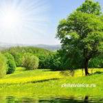 «Берегите родную природу» — сочинение на свободную тему